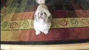 Куче лае много смешно!.