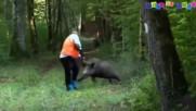 Ловци срещу глигани - Ловни изцепки (МИНУТКА СМЯХ)