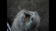 Малка сладка сова