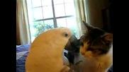 а после котките са виновни , че ядат пилетаата