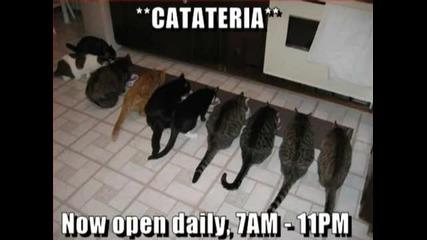 Мросто котки