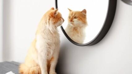 Котки пощуряват пред огледало