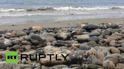USA: State of emergency declared as Cali oil spill disaster hits 397,000 litres
