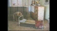 Куче ляга да спи и се завива!!
