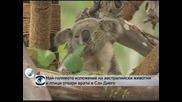 Най-голямото изложение на австралийски животни и птици отваря врати в Сан Диего