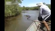 Бразилец хваща гигантска анаконда за опашката