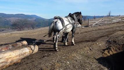 konarsko kone
