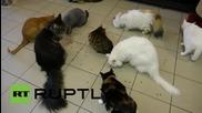Броят на емблематичните котки в Ермитажа ще бъде намален заради проблем с пренаселването