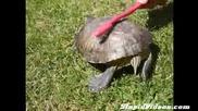 Секси костенурка върти дупе пред камерата