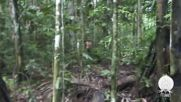 Brazil: Last of his tribe emerges in newly released Amazon footage