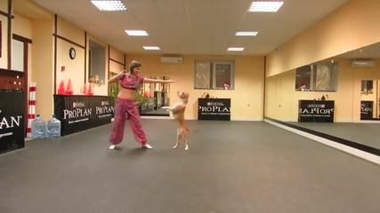 Питбул танцува на индиийски ритми
