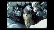 Bate Pe6o Feat Tina - Wolf