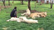 Любовта между дивите животни и човека !