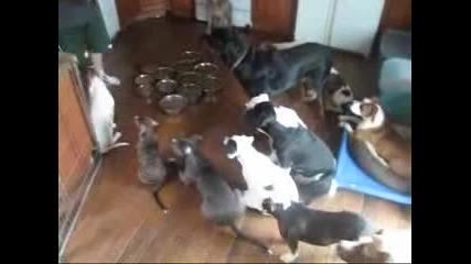 Търпеливи кучета си чакат храната
