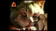 Мишка Играе Кючек Пред Котка Xd