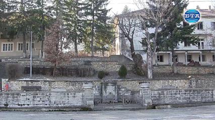 """500-годишен дъб представя България в конкурса """"Европейско дърво на годината"""""""