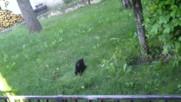 Малки котенца 4