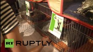 Russia: Annual cat give-away hits St. Petersburg's iconic Hermitage Museum