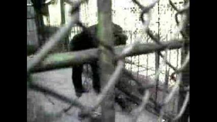 maimunata v starozagorskiq zoopark 1