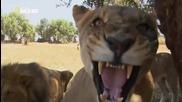 Необичайно поведение на животните - Странни случки