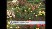 Цъфнаха първите рози в Ботаническата градина