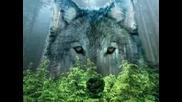 Одинокая волчица .. превод .. Павел Кашин