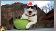 Котки бичат айляк - как да си ДЗЕН