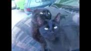 Влюбени котета - колко сладко :)