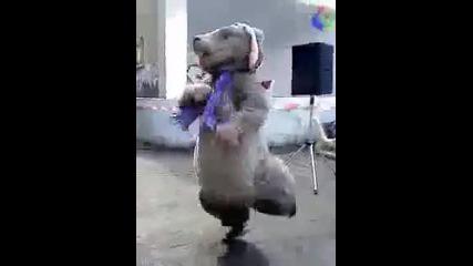 Мармота на Милка танцува Ruslana Wild dance