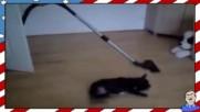Животински дрифт - Смях
