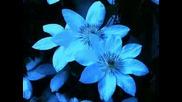 Amanda Lear - Blue Tango