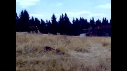 Дп Ориентиране 2006 - Щафети