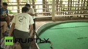 Thailand: King Cobras beaten and provoked at tourist snake show