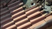 Прилепи под керемидите на покрив