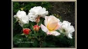 Валсът на розите!!!