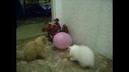 kotenca s balon