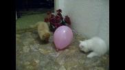 играта на режко и бечи с балонче