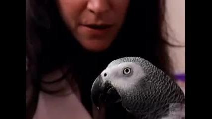 Алекс - говорещия папагал