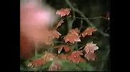 Adamo - Обичам ( ПРЕВОД)