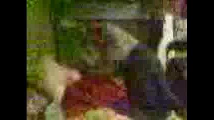 Видео003
