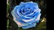 Bolero de Ravel Musica Clasica Rosas