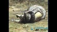 Най - Големите Змии На Света!!!