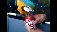Възпитан папагал отваря кенче бира за стопанина си!