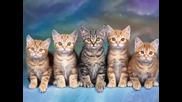 Котенца Умници - Детска Песничка