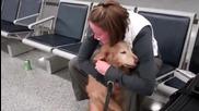 Любовта между човека и кучето