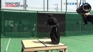 Самурай успява да разреже бейзболна топка летяща със 160 км/ч