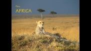 peru - africa