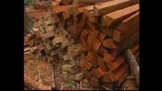 Опазването На Амазонските Джунгли
