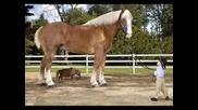 Тежковози(коне) - 2 Част