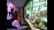 Пебълс в зоологическата градина
